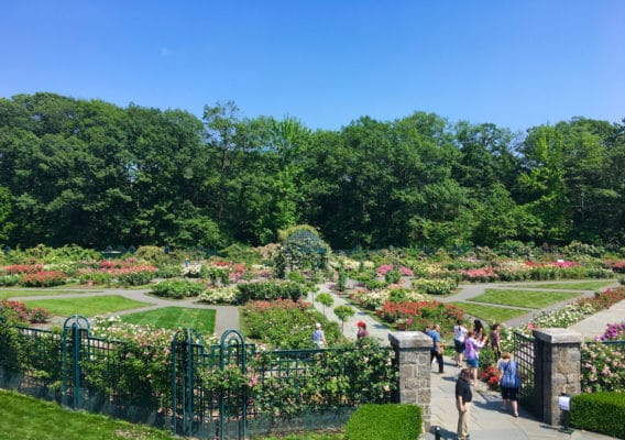 best gardens in North America - NYBG Rose Garden