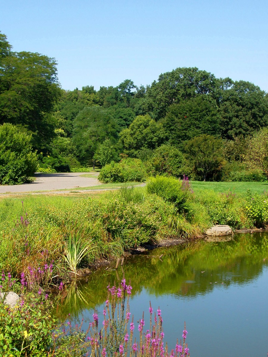 Explore Boston - Arnold Arboretum on the Harvard University campus. Photo by Daderot via Creative Commons