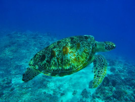 Yacht Cruise in Indonesia - sea turtles