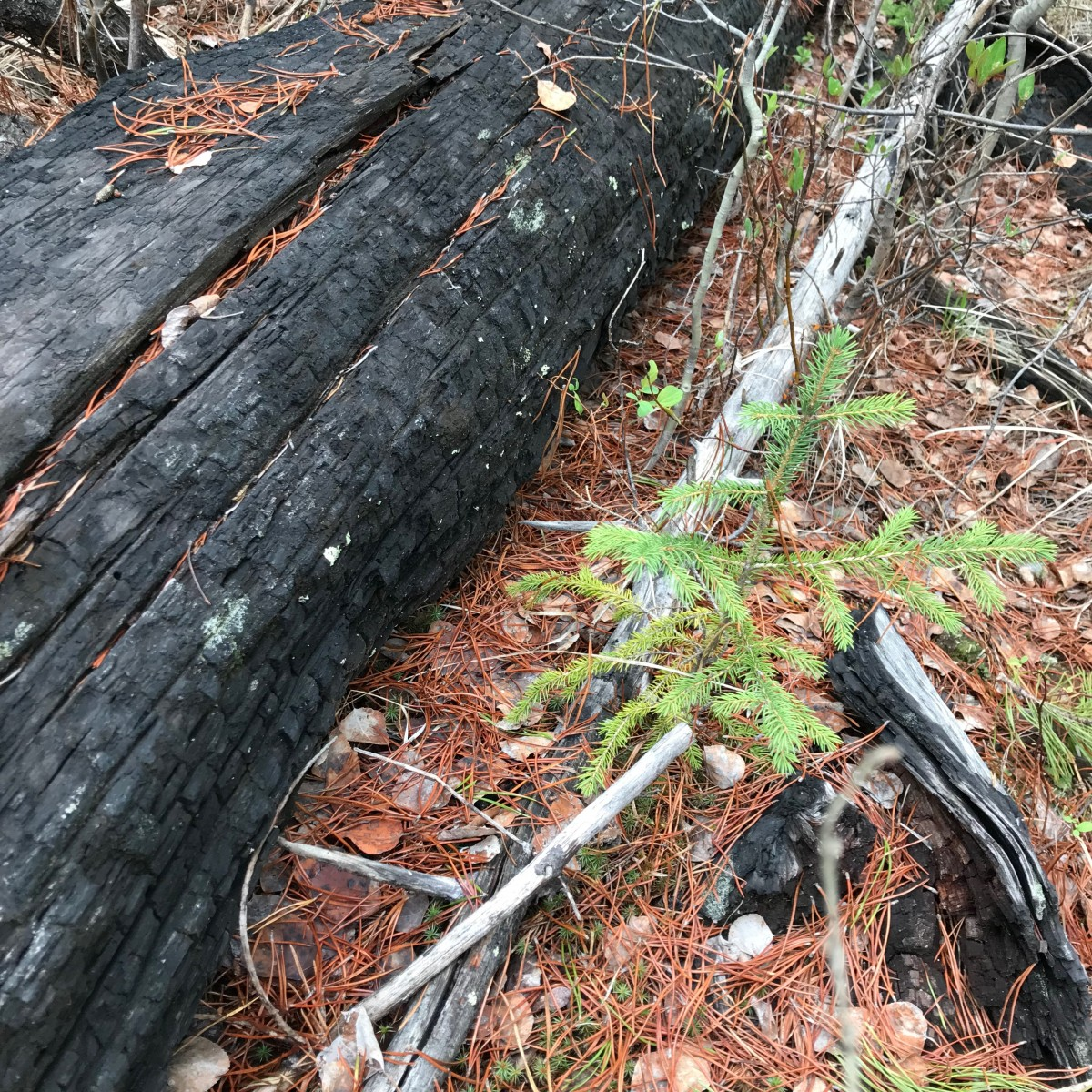 Forest and Fire Nature Trail - Whitefish Montana Adventures
