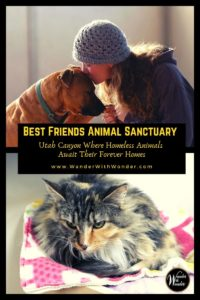 Best Friends Animal Sanctuary is a magical place where homeless animals live in a beautiful canyon setting where they wait for their forever homes. The sanctuary is located in southern Utah's red-rock country just outside the town of Kanab in Angel Canyon. #pets #petfriendlytravel #travel #voluntourism #Utah #kanabcanyon #volunteer #familytravel