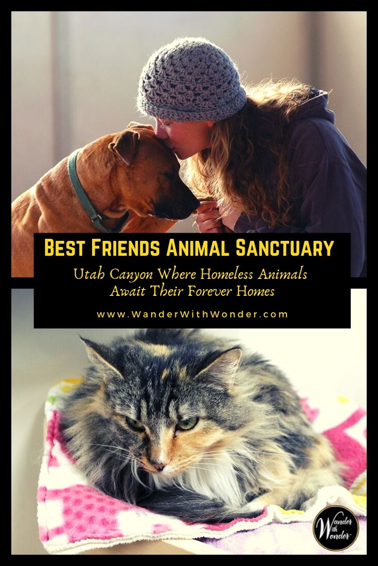 Best Friends Animal Sanctuary is a magical place where homeless animals live in a beautiful canyon setting where they wait for their forever homes. The sanctuary is located in southern Utah\'s red-rock country just outside the town of Kanab in Angel Canyon. #pets #petfriendlytravel #travel #voluntourism #Utah #kanabcanyon #volunteer #familytravel