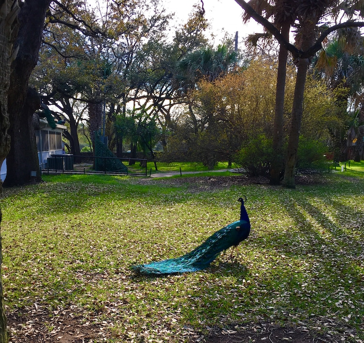Mayfield Park. Guide to 48 hours in Austin Texas