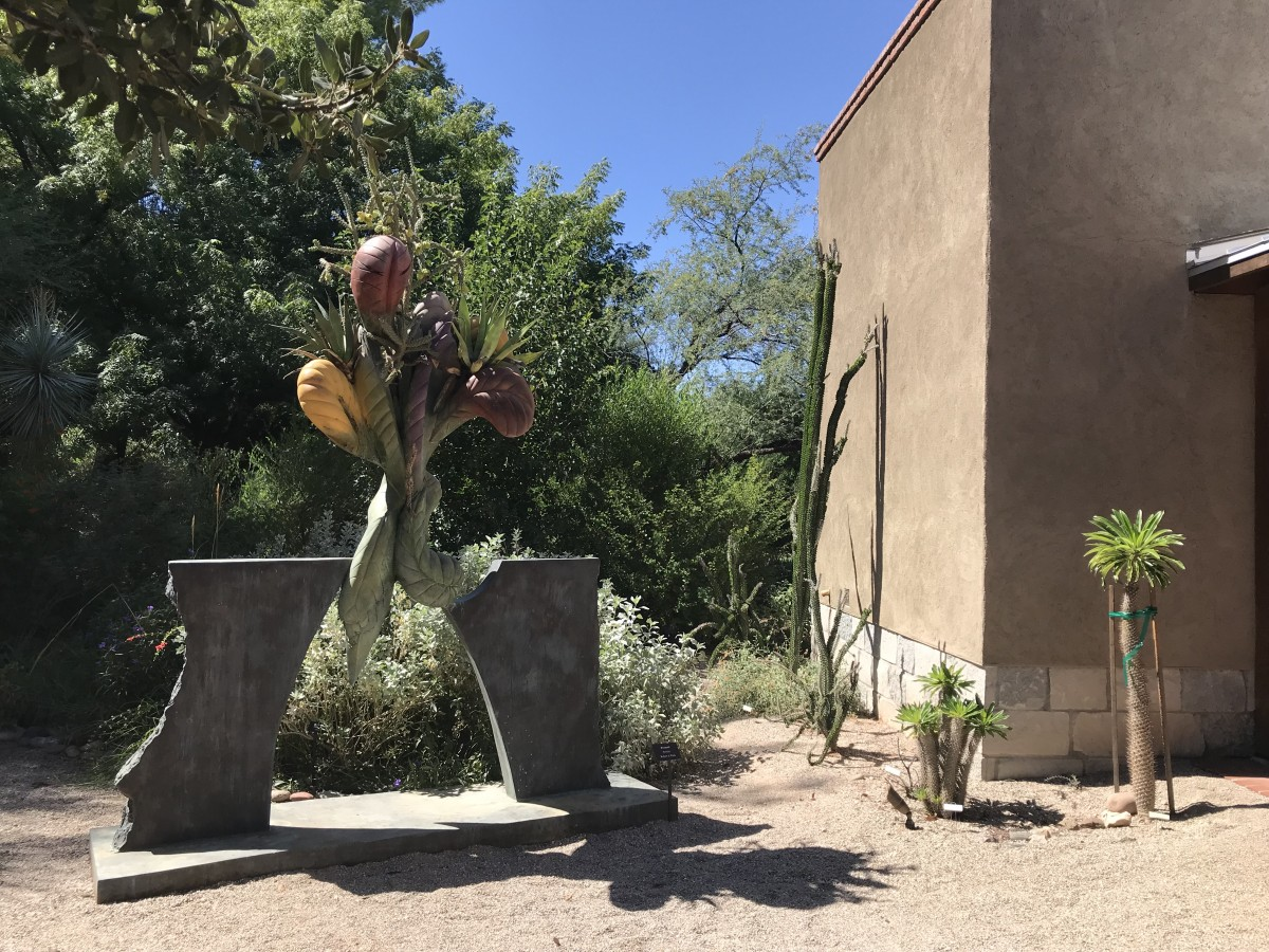 24 hours in Tucson