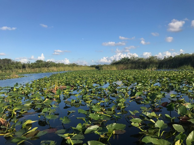 Native flora in the Everglades. Photo by Penny Sadler