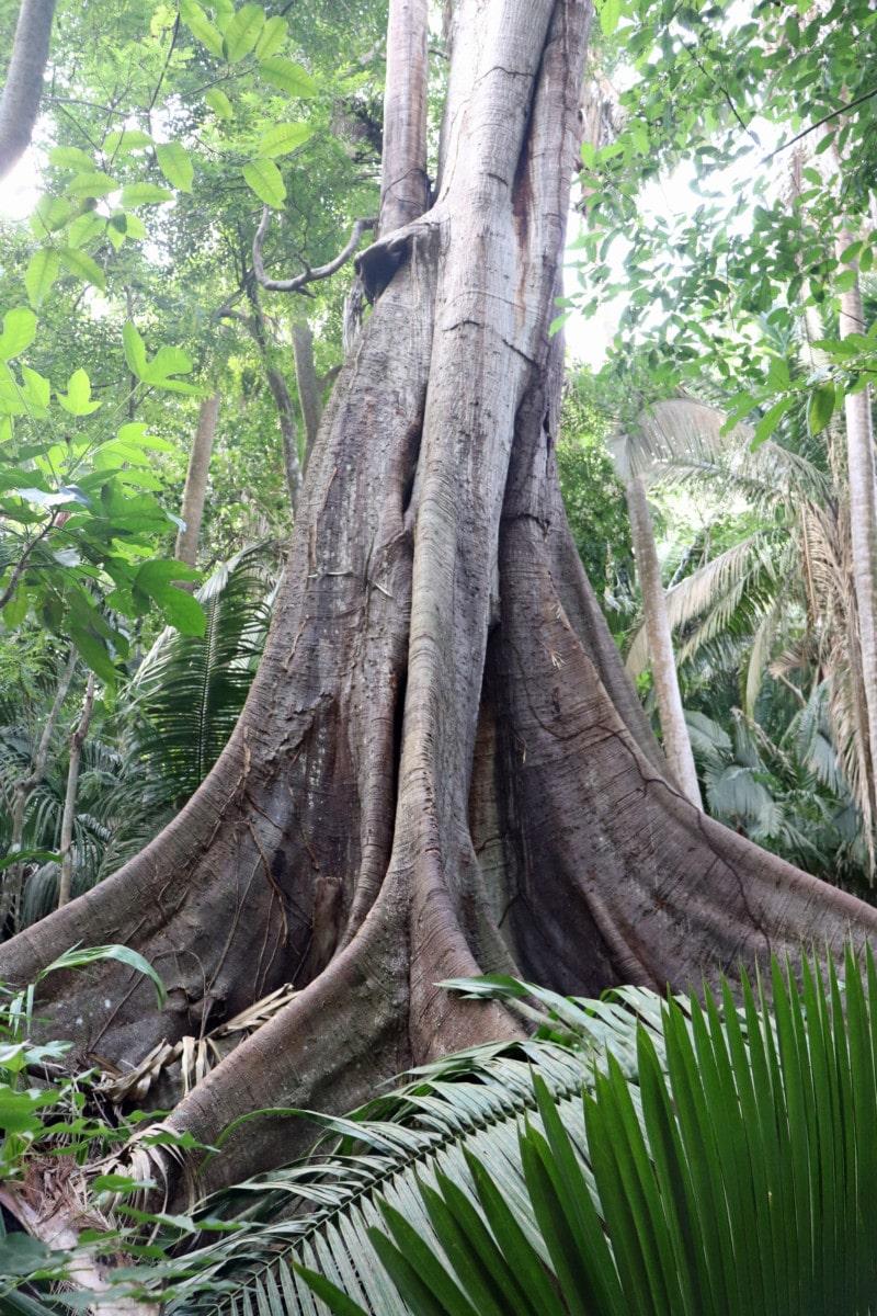 Lo de Perla Jungle Adventure