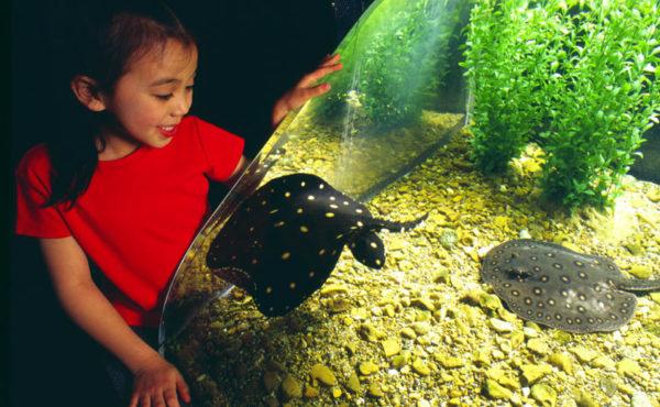 Virtual visit Tennessee Aquarium