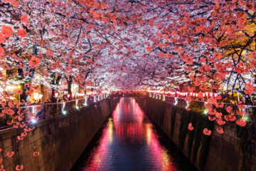Japan in the Spring