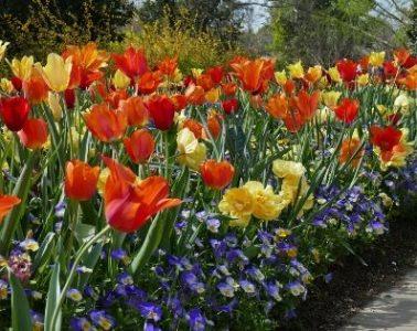 Virtual Garden Visits