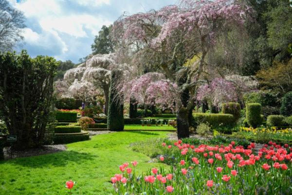 Virtual gardens