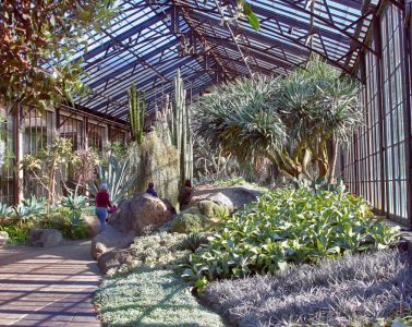The dry climate conservatory at Longwood Gardens. Photo by Barbara Rogers