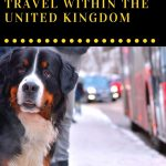 As a UK-based pet owner, it's always a bit of a worry where you can travel with your dogs. Here are suggestions for happier pet-friendly travels in the UK.