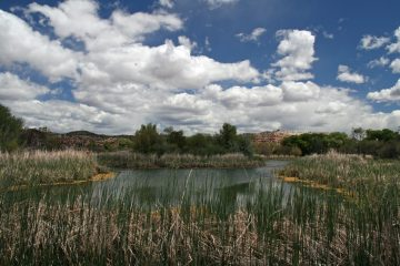 Verde Valley River Scene