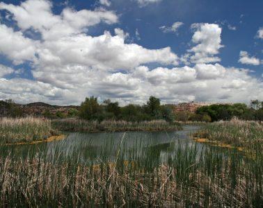 Verde Valley River Scene