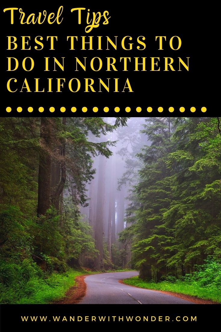 California is a beautiful state with plenty to see and do. While the lower half of the state boasts some of the nation's best beaches and shopping, don't count out Northern California. Here you'll find the state capital, gorgeous natural and wooded areas, and several must-see attractions. Check out some of the best things to do during your next visit to Northern California.