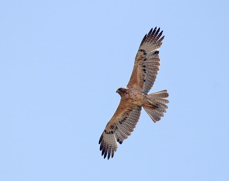 Wildlife Tour in Jordan