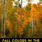 It's time to check out the magnificent fall colors in the Southwest. From the golden aspens of Colorado and northern New Mexico to the stunning displays of red and yellow oaks along Oak Creek in Sedona, you'll find that now is the time for fall foliage touring in the Southwest. These are some key areas where you'll normally find brilliant yellows, oranges, and golds. Discover where to find the best fall foliage in the Southwest.