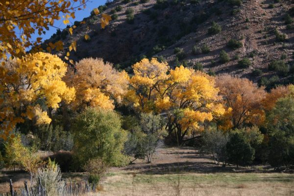 High Road Fall - Fall Colors in the Southwest