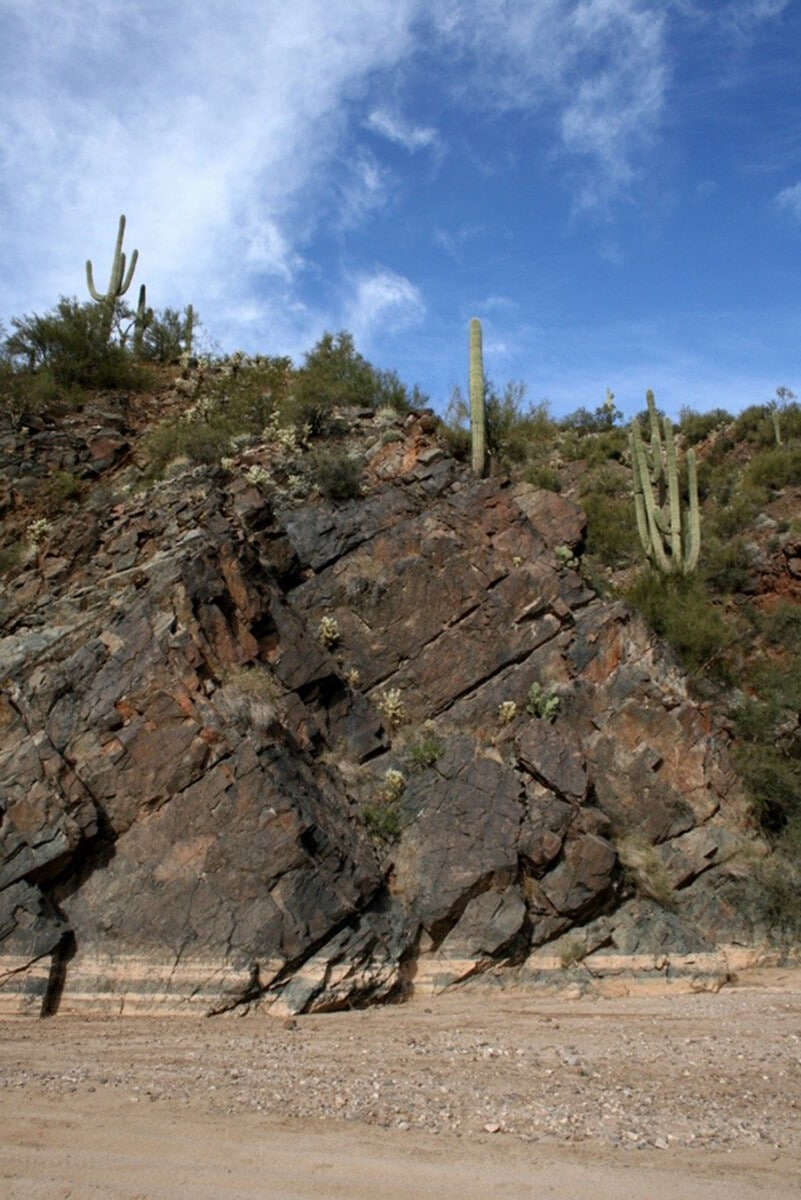 Saguaros and Geology - Saguaro Cactus