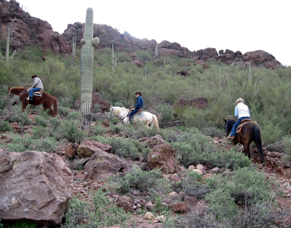 Arizona Horseback Riding - Saguaro Cactus