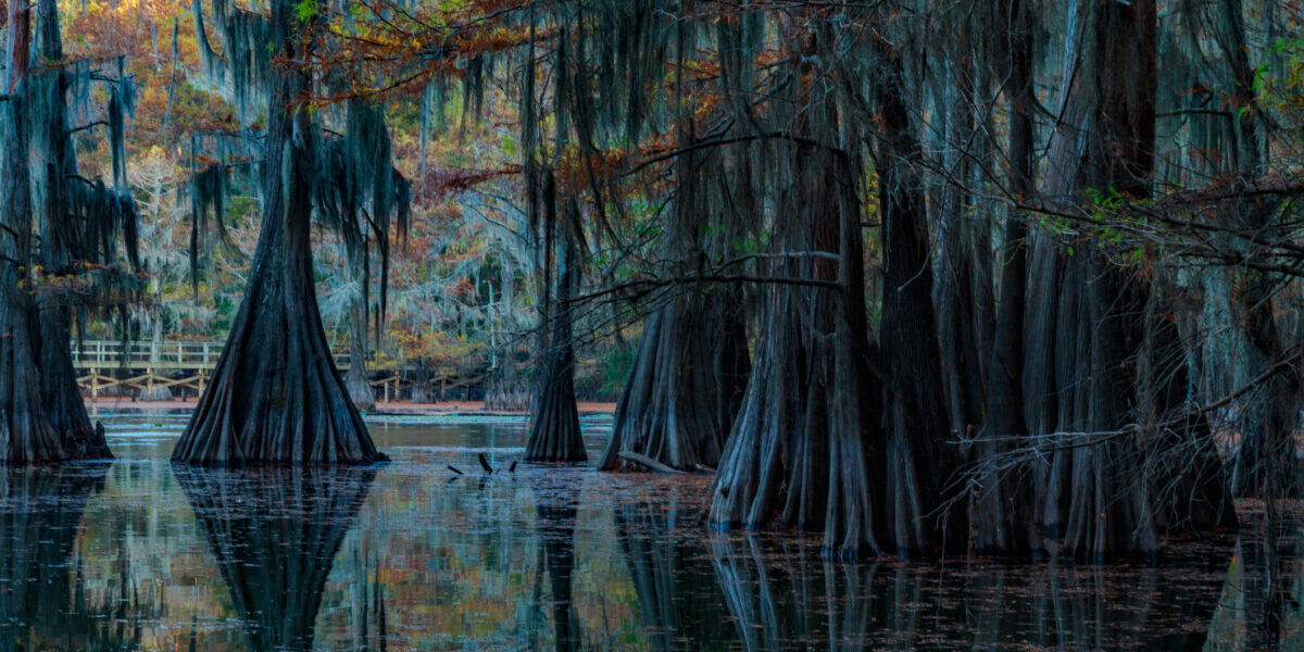 Caddo Lake in Texas