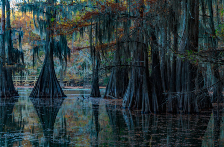 Caddo Lake in Texas