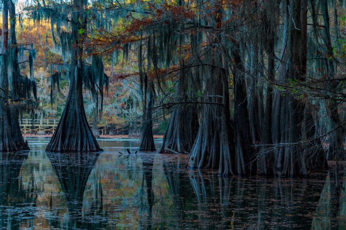 Adventure Camping At Caddo Lake, Texas